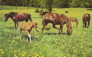 Animals. Horse Heaven Nioce modern english PC. continental size