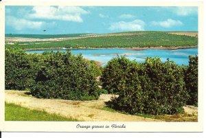 Orange Groves in Florida Postcard Citrus Growing areas PC120H3-6921
