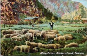Sheep Scene Bonanza Creek Dawson YT Yukon Unused Postcard E78
