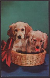 Cocker Spaniel Puppies In a Basket Postcard