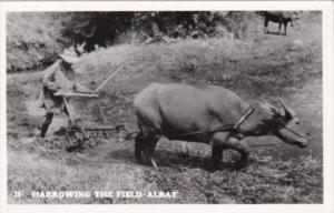 Philippines Farmer With Ox & PLow Harrowing The Rice Field Real Photo