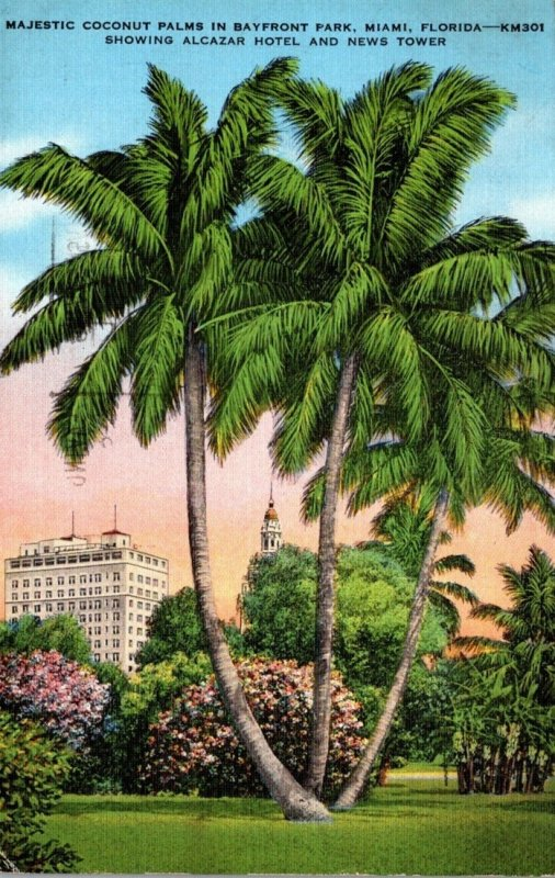 Florida Miami Coconut Palms In Bayfront Park 1937