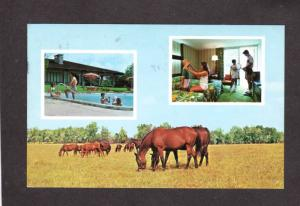 FL Sheraton Country Inn Hotel Motel Ocala Florida Postcard Horses Pool