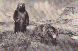 Alaska Brown Bear and The Aghileen Pinnacles American Museum Of Natural Histo...