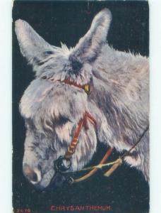 D-back BURRO DONKEY MULE NAMED CHRYSANTHEMUM Colorado Springs postmark CO E6674