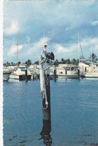 Yachts Basins Along The Inland Waterway, Myrtle Beach, South Carolina, 1950-1...