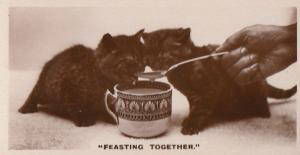 Cats Being Spoonfed German Old Real Photo Cat Feast Cigarette Card