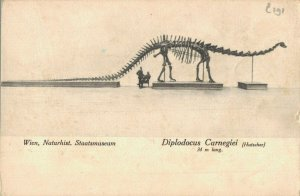 Diplodocus Carnegii Fossil Dinosaur Wien Vienna Postcard 06.41