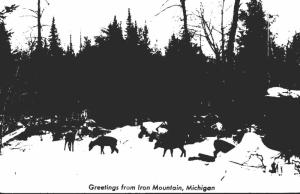 Michigan Greetings From Iron Mountain Deer Herd Real Photo