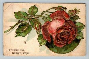 Roswell OH-Ohio, Greetings, Rose, Embossed, Vintage Postcard