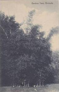 Bermuda Bamboo Trees
