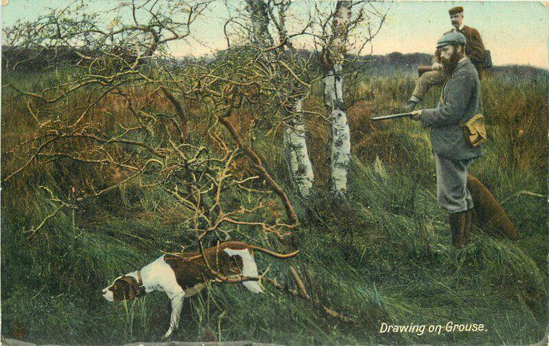 Artist Impression Bird Dog C-1910 Hunting Grouse Postcard 5895