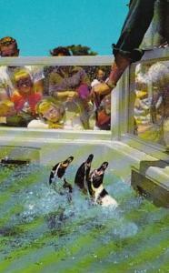 Indiana Indianapolis Humboldt Penguins Indianapolis Zoo George Washington Park