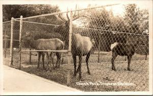 Traverse City Michigan~Elk & Deer in Clinch Park Behind High Fence~1950s RPPC