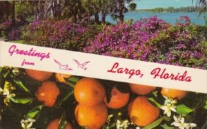Greetings From Largo Florida 1966