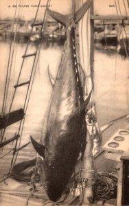 Maine A 800 Pound Tuna Catch 1962