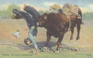 Western Cowboy Postcard Postcards  Sharkey