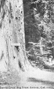 Roosevelt Santa Cruz Big Tree Grove Santa Cruz CA