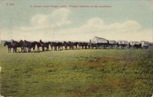 Sixteen horse freight outfit, Supplies to the mountains, PU-1908