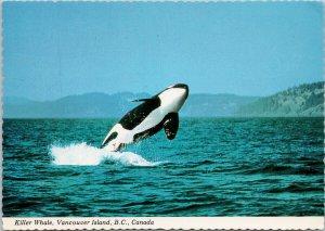 Orca Killer Whale Vancouver Island BC c1980s Kenneth Balcomb Postcard C3