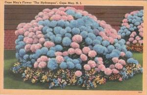New Jersey Cape May's Flowers The Hydrangea 1953