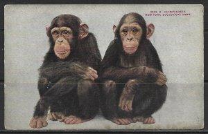 New York, New York - Chimpanzees - Zoological Park - [NY-387]