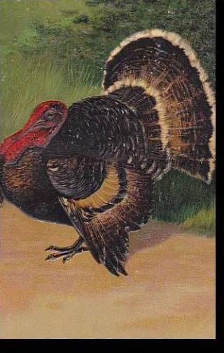 PFB Serie 7721 Thanksgiving Greetings Turkey