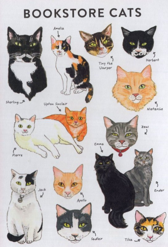 Bookstore Book Shop Cat Cats Artist Painting Postcard