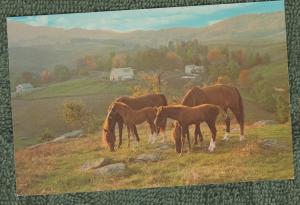 Virginia Mares and Foals Postcard Scenic Horses Grayson County