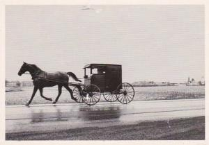 Pennsylvania Amish Buggy Along A Wet Lancaster County Road 1996