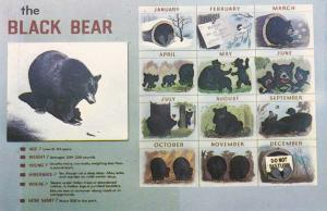 Black Bear Life by Calendar Month - Great Smoky Mountains TN, Tennessee