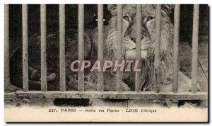 Paris - 5 - Garden Plants - Lion & # 39Afrique - Africa - Old Postcard