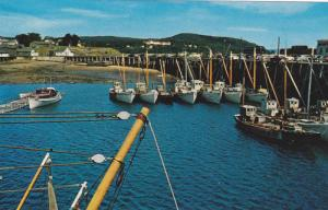 The famous Digby Scallop Fleet with C.P.R. Digby Pines Hotel in background,  ...