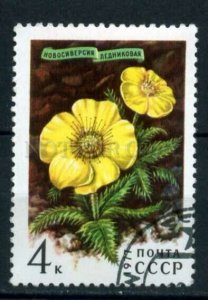 507798 USSR 1977 year Flowers mountains of Siberia stamp
