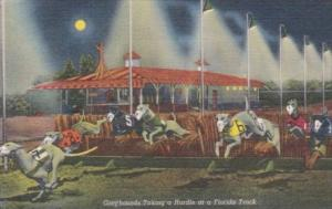 Dogs Greyhounds Taking A Hurdle At A Florida Track Curteich