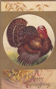 Happy Thanksgiving With Turkey Clapsaddle 1909