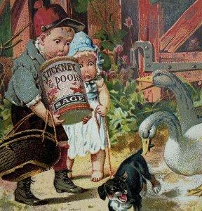 Stickney & Poor's Mustards Boy Girl Dog Swan State St Boston Mass Trade Card