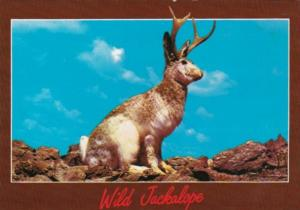 Animal Humour The Western Jackalope