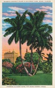 Miami FL Florida Coconut Palms in Bayfront Park - Showing Alcazar Hotel - Linen