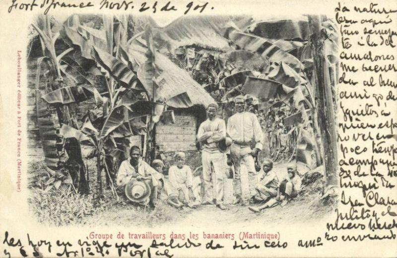 martinique, Native Workers between Banana Trees (1901)
