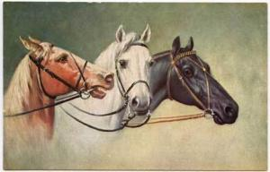 Beautiful Signed Multi Horses Postcard
