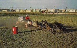 SASKATOON , Saskatchewan , Canada , 1950-60s; Pony Chuck Wagon Racing