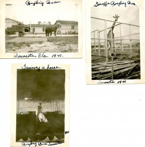 FL - Sarasota, 1941. 3 photos- Ringling Bros. Circus Winter Home  (3.5 X 2.5)