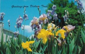 Beautiful Flowers Greetings From Dickson Tennessee
