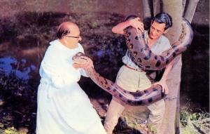 Snake - Boa Constrictor