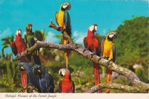 Florida Miami Parrot Jungle Colorful Macaws