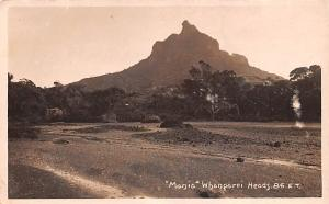 New Zealand Old Vintage Antique Post Card Manio Whanparei Heads Writing on back