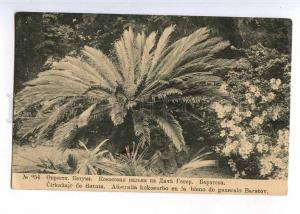 223357 GEORGIA Batumi palm hut General Baratova #254 postcard