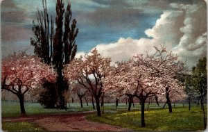 Rare - Polychorome Art Vintage postcard - Trees - Flowers Riverside Posted