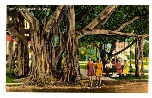 FL - Banyan Tree